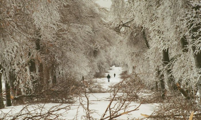A pedestrian walks past fallen branches and trees after a freezing rainstorm in Ottawa, Canada. (Dave Chan/AFP/Getty Images)