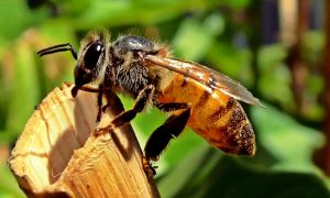 Scientists Try Teaching Honeybees Impossible Concept–They Are Shocked At The Results