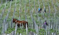 Chinese-Owned Vineyards in France Seized on Suspicion of Tax Fraud