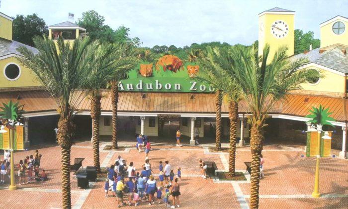 Audubon Zoo. (Audubon Nature Institute via Reuters)