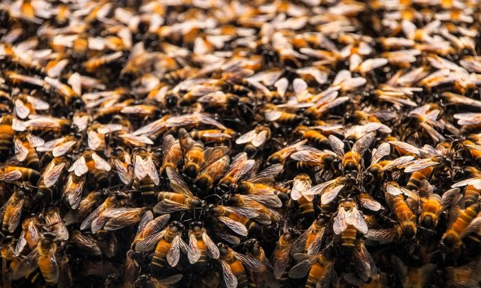 A cleaning woman was stung hundreds of times by a large swarm of bees in Lake Forest, Southern California, on July 16, 2018. (Stock photo/Donvriko/Pixabay)
