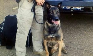 Mississippi K-9 Dies From Heat Stroke in Hot Car