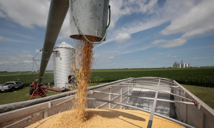 Farmer John Duffy loads soybeans from his grain bin onto a truck before taking them to a grain elevator in Dwight, Illinois, on June 13, 2018. (Scott Olson/Getty Images)