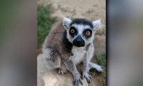 Santa Ana Zoo Hits the Road