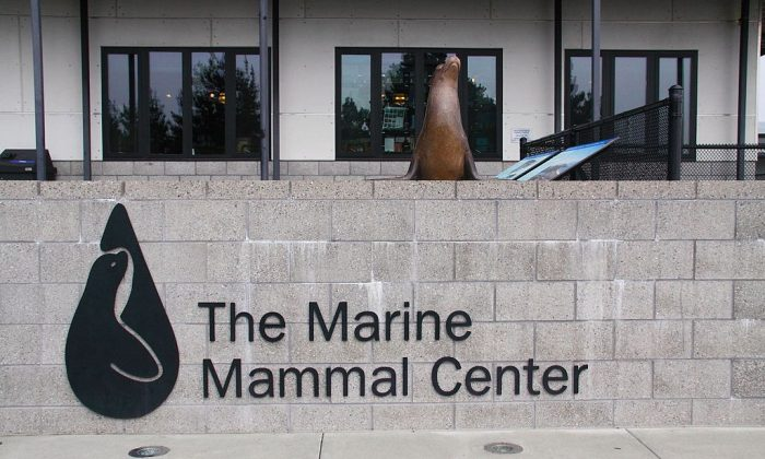 "Picture of front entrance to Marine Mammal Center in the Marin Headlands in Sausalito, CA, September 10, 2012. (""Marin Marine Mammal Center"" by 	Canticle/WikipediaCommons[CC BY-SA 3.0 (ept.ms/2Bw5evC)])"