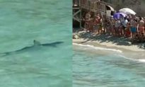 Tourists Evacuate Spanish Beach After Shark Sighting