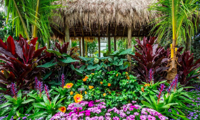The New York Botanic Garden celebrates the flora and heritage of Hawaii this summer. (Courtesy of NYBG)
