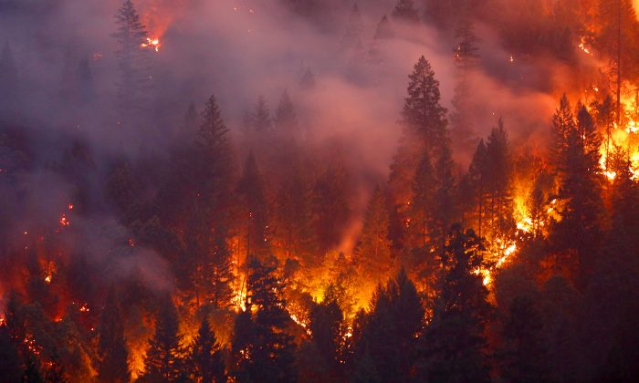 Forest burns in the Carr Fire west of Redding, California on July 30, 2018. (Terray Sylvester/Getty Images)