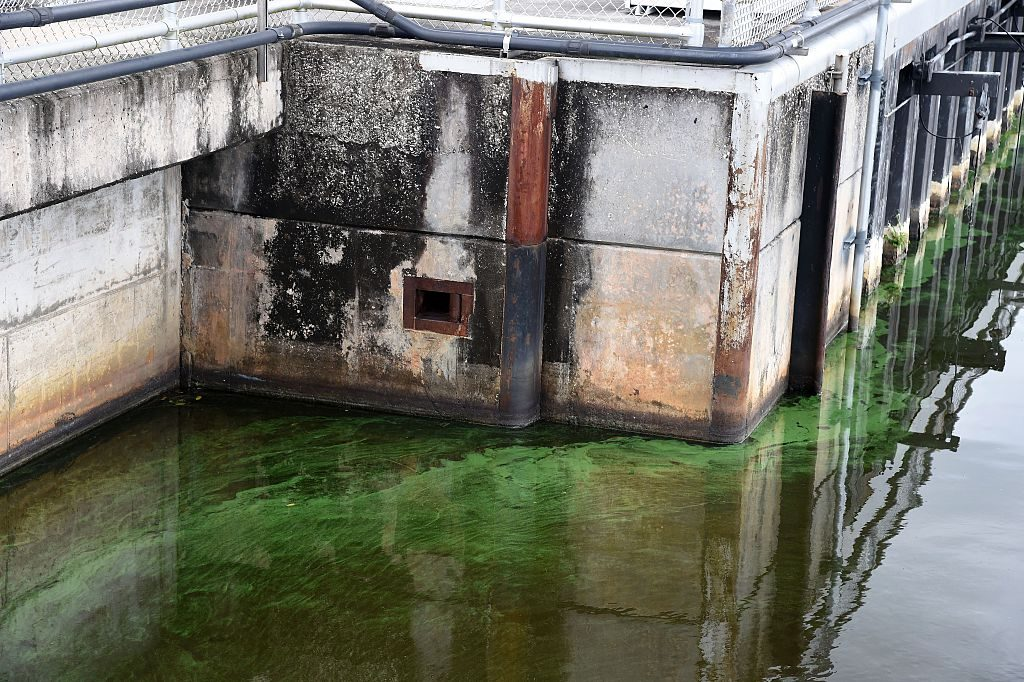 Water in the St. Lucie River is covered by a blue-green algae bloom plaguing the river as it accumulates at the St. Lucie Lock and Dam in Port Saint Lucie, Florida, on July 5, 2016. (Rhona Wise/AFP/Getty Images)