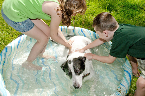 A young entrepreneurs washing a dog. (Shutterstock)