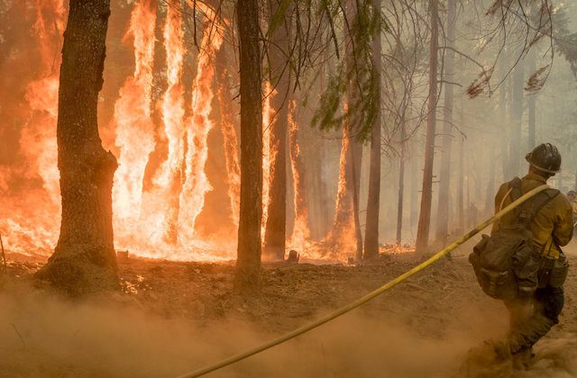Firefighter fight fire near torching trees as wildfire burns near Yosemite National Park in California on Aug. 6, 2018. (Handout via REUTERS)