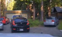 Officer Shoots Beanbag Rounds at Car to Free Bear Inside