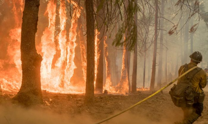 Firefighter fight fire near torching trees as wildfire burns near Yosemite National Park, Calif., on Aug. 6, 2018.  (USFS/Yosemite National Park/Handout via REUTERS)