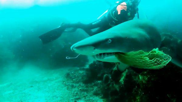 diver shark fishing net rescue