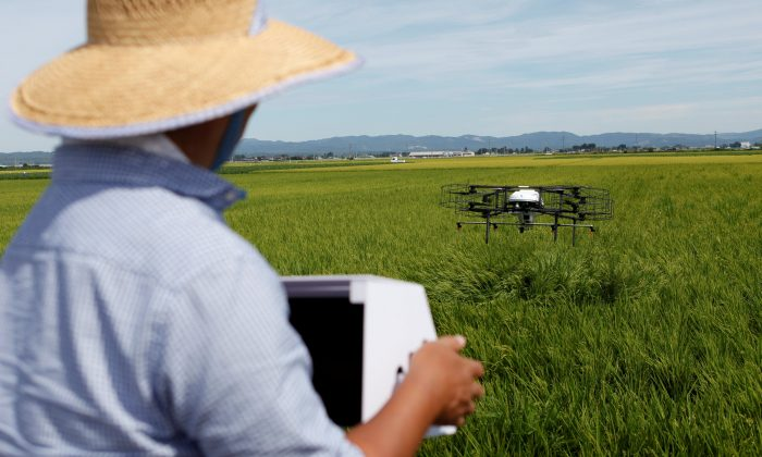 Nileworks Inc.'s automated drone flies over rice plants, spraying pesticide while diagnosing growth of individual rice stalks, during a demonstration in Tome, Miyagi prefecture Japan on Aug. 20, 2018. (Reuters/Yuka Obayashi)