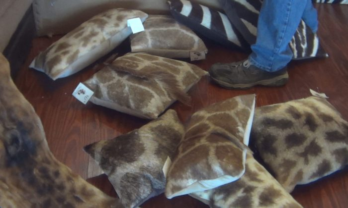 Giraffe-hide covered pillows for sale at The African Market Trophy Room Collection, Myakka, FL, March 2018. (Courtesy of HSUS)
