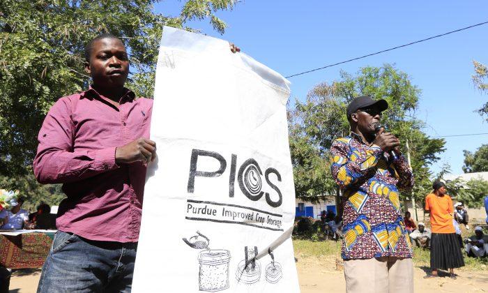 Tanzanian farmers display the locally made hermetic grain storage sacks in Kondoa, Tanzania, on June 6, 2018. (Noor Khamis/University of Zurich)