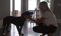 Houston Astros Pitcher Adopts Dog Saved From Death