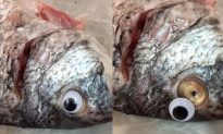 Googly Eyes Used to Lure Customers to Fish Shop