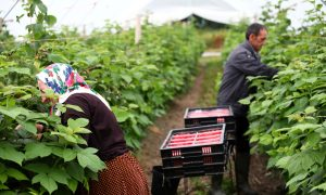 UK Non-EU Migrant Farm Workers to Get Temporary Visas After Brexit