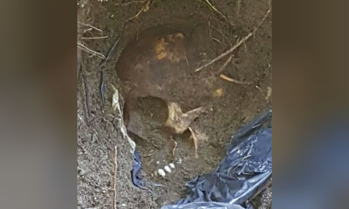 A skull is seen at the site of clandestine burial pit in the Gulf coast state of Veracruz, Mexico. (Veracruz State Prosecutor's Office/AP)