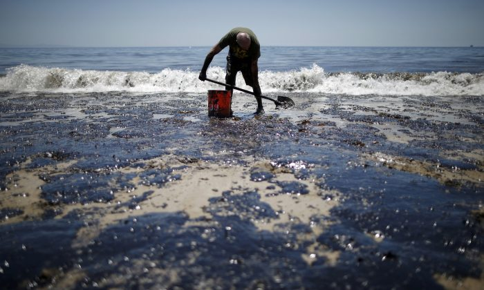 William McConnaughey, 56, who drove from San Diego to help shovel oil off the beach, stands in an oil slick in bare feet along the coast of Refugio State Beach in Goleta, Calif., May 20, 2015. (Lucy Nicholson/Reuters)