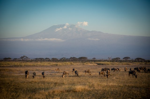 View of Kilimanjaro. The ascent to the summit takes climbers through five different climate zones. (Courtesy of Abercrombie & Kent)