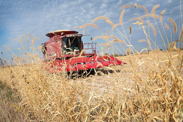 Rick Wirt harvests corn on Oct. 22, 2015 near Burlington, Iowa.(Scott Olson/Getty Images)
