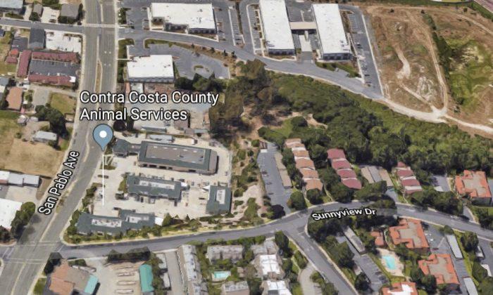 Contra Costa County Animal Services. 910 San Pablo Ave, Pinole, CA 94564. (Map data @2018 Google)