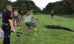 Florida Disc Golfer Attacked by Alligator in Pond
