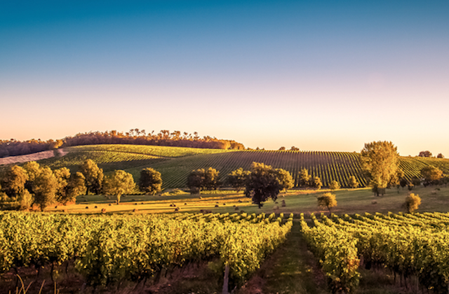 The Bordeaux wine region is six times larger than Napa Valley. (Shutterstock)