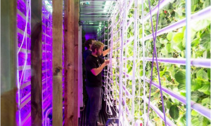 Paris Shipping Container Makes Strawberries Where the Sun Doesn't Shine
