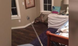 Oklahoma Woman Wakes up, Turns on Light, Sees Coyote in Bedroom
