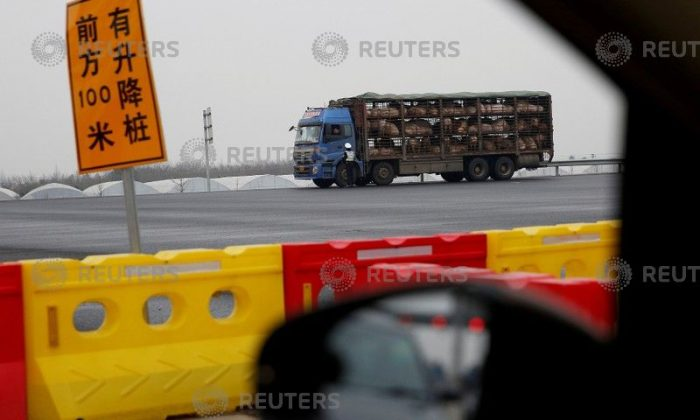 A police officer checks a truck transporting pigs on a highway in Shanghai on January 12, 2017. (Aly Song/Reuters)