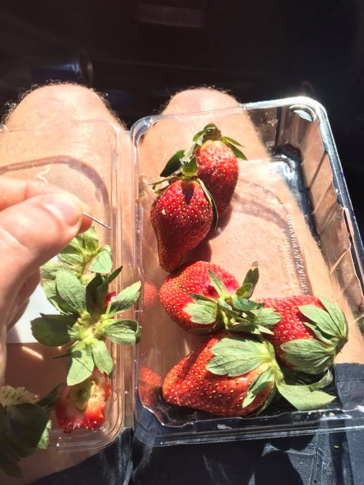 The needle found among strawberries