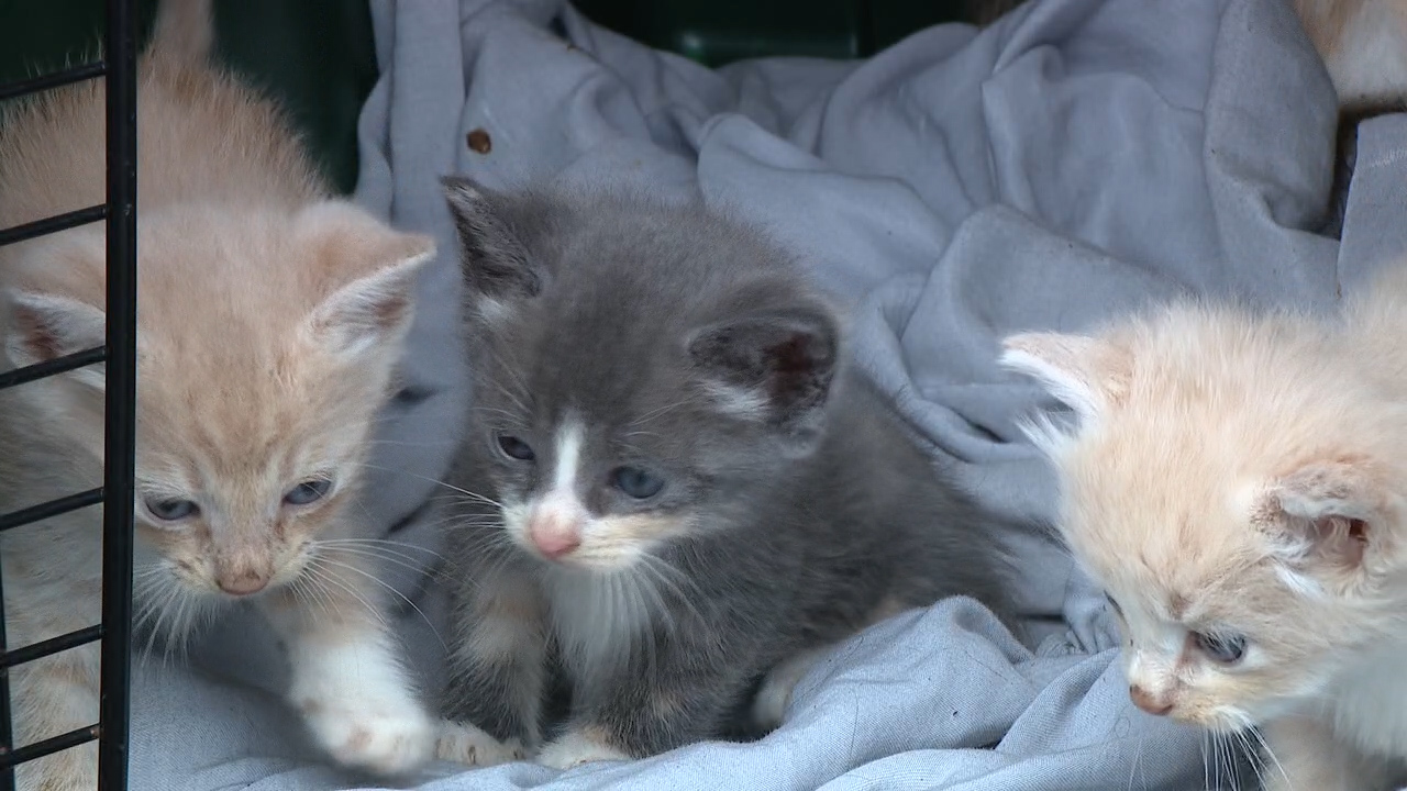 Kittens in the back of a vehicle