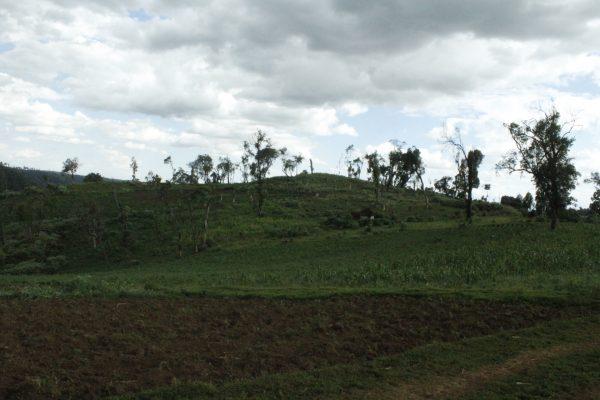 Mau Forest Kenya