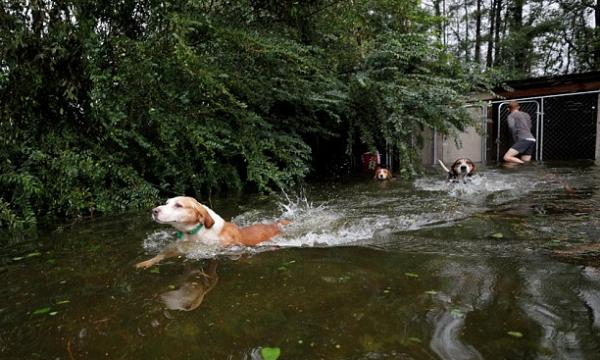 Dogs rescued in Leland