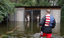 Volunteers Rescued at Least 26 Dogs in North Carolina