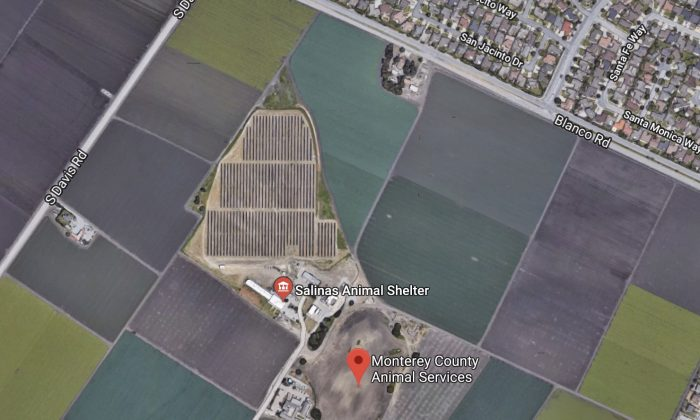 Monterey County Animal Services. 9450, 160 Hitchcock Rd, Salinas, CA 93908. (Map data @2018 Google)