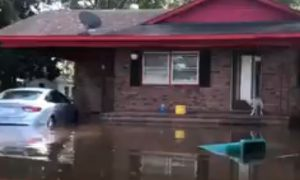 Video Shows Dog Being Rescued After Hurricane Florence Flooding