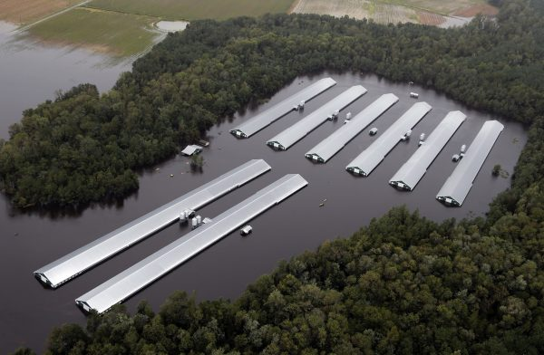 Chicken farm buildings inundated with water