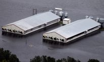 Florence's Flooding Kills 3.4 Million Poultry and 5,500 Hogs