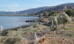 Video: Spider Webs Cover Entire Greek Lagoon