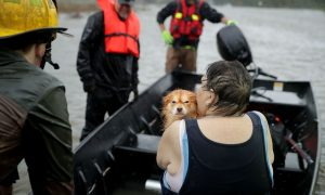 Animal Rescuer Arrested for Allegedly Medicating, Sheltering Hurricane Pets Without Permit