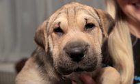 18-State Disease Outbreak Linked to Pet Store Puppies