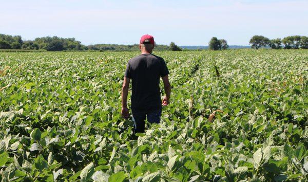 Soy bean farmer tariffs
