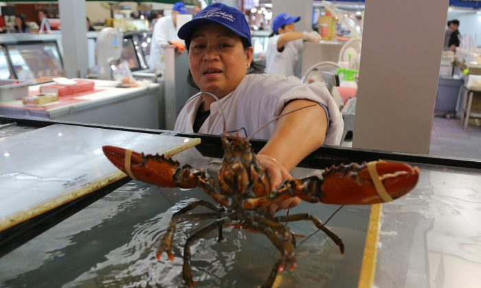 A fishmonger places a Canadian lobster into a display tank at St. Lawrence Market South in Toronto, Ontario, Canada on Sept. 27, 2018. (Chris Helgren/Reuters)