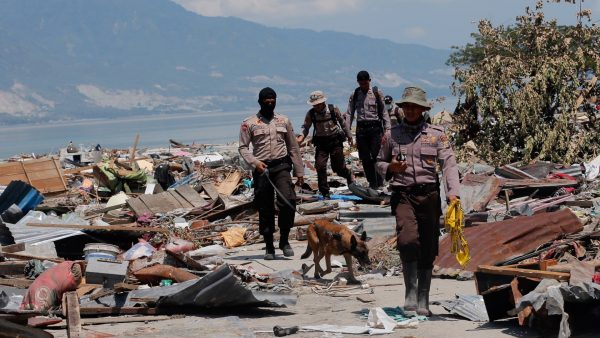 K9 search victims wreckage Palu