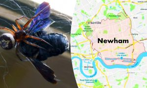 False Widow Spiders Force Four London Schools to Close